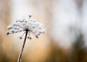 Zen Spirit - Het leven is als sneeuw